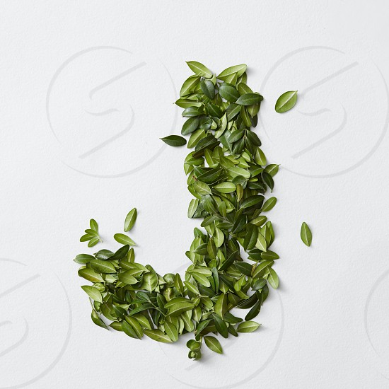 English alphabet concept. Alphabet isolated on white background. Abc letters from green leaves. Letter J represented with green leaves. Symbol J on white. photo