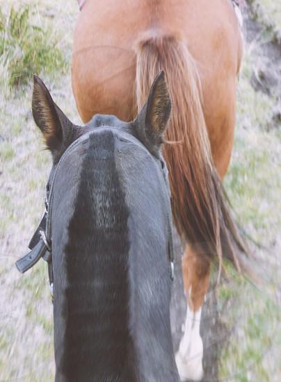 Rustic horses cowboys ranch riding  photo