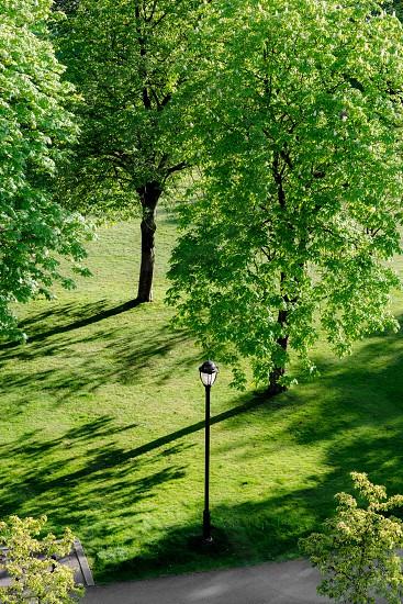 Green 13 photo