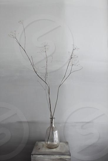 Minimalism dried flowers grey vase grey wall photo