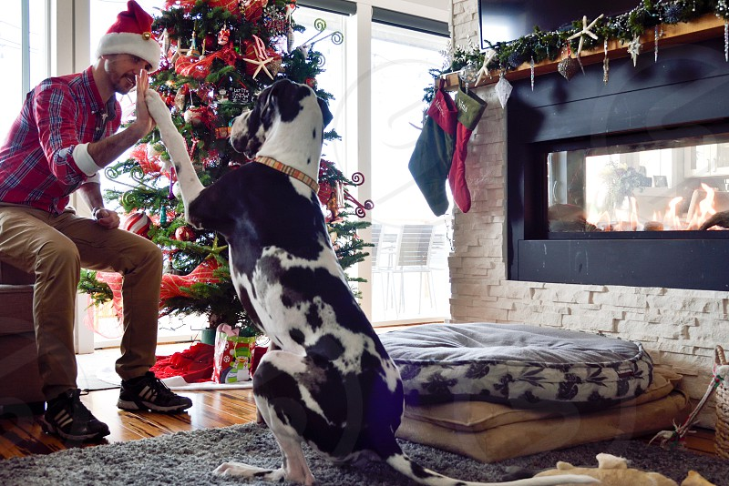 Puppy Christmas high five photo