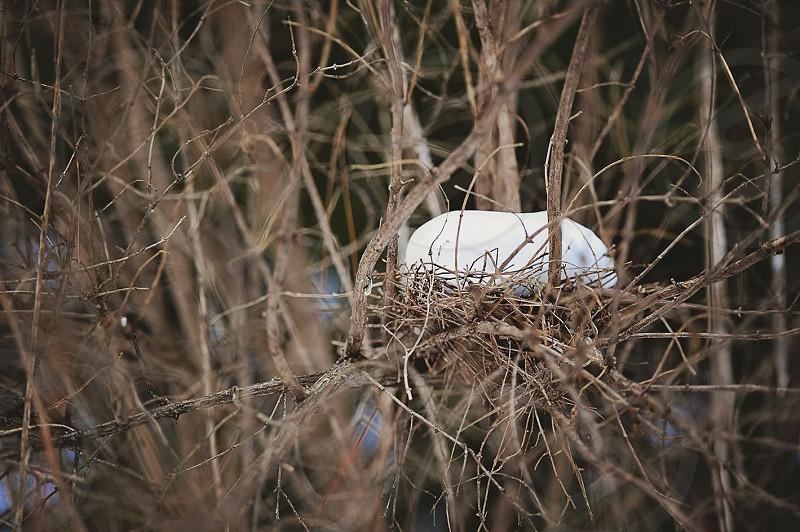 Winter Midwest wisconsin birds nest snow photo