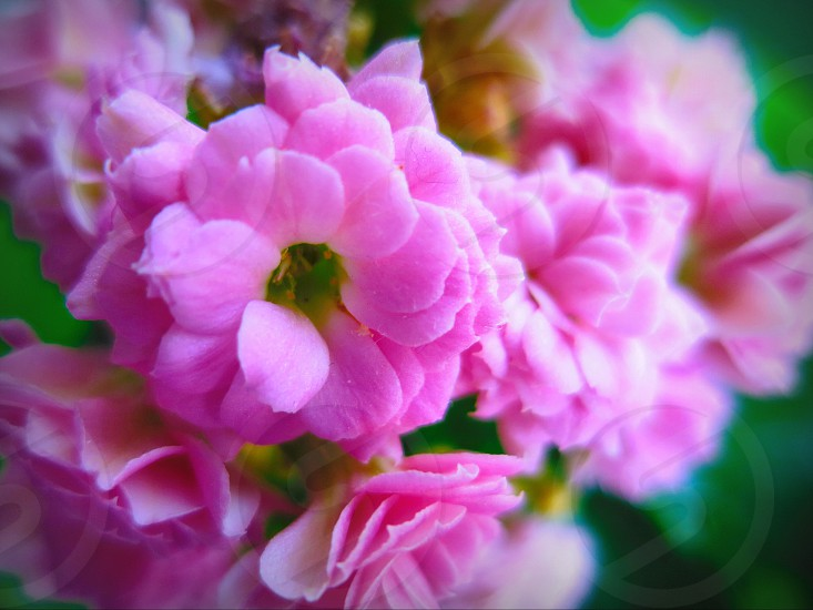 spring flower pink blossom reborn born new young beauty green nature photo