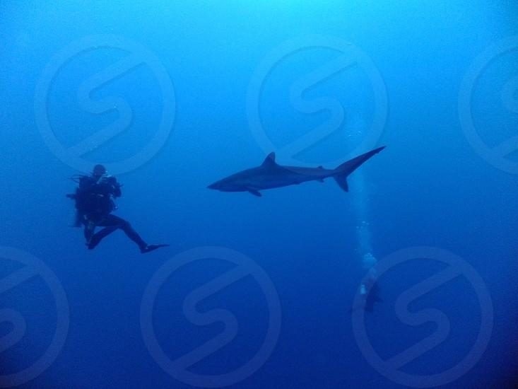 scuba diving in Indian ocean photo