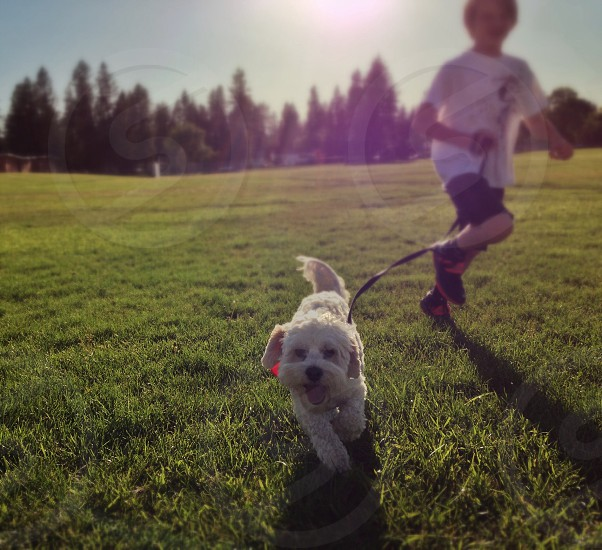 boy running with his white dog photo