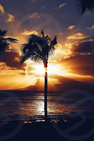 Canary island Lanzarote  sea palmtree  sunset photo