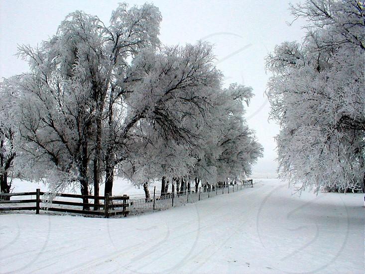 ND Farm winter photo