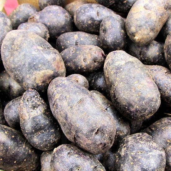 Purple Peruvian potato fingerlings photo