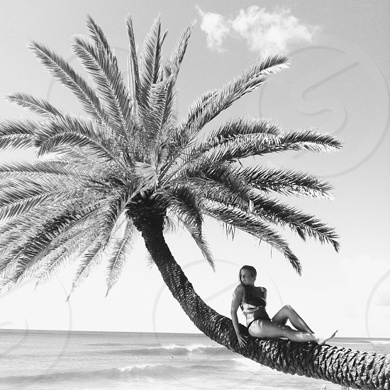 woman in black and white 2 piece swim suit sitting in a palm tree photo