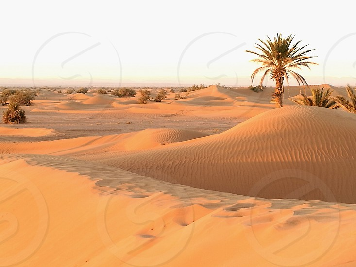 Sahara desert in Marocco landscape nature beautiful photo