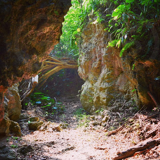 narrow dirt path with brown slanted tree ahead between rocks with green plants under sunlight photo