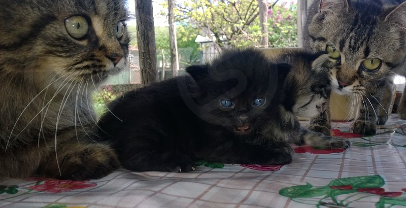 looking cute photo