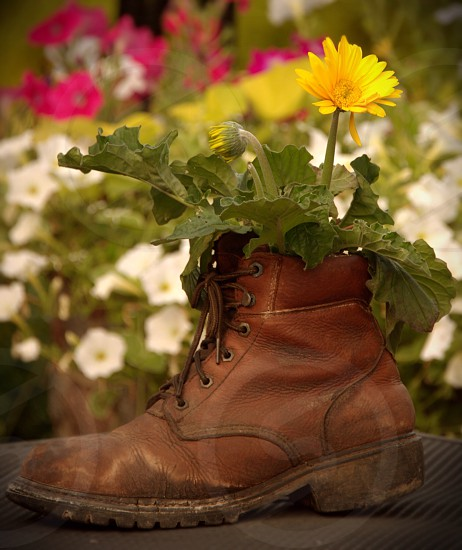 brown leather work boot yellow flower photo