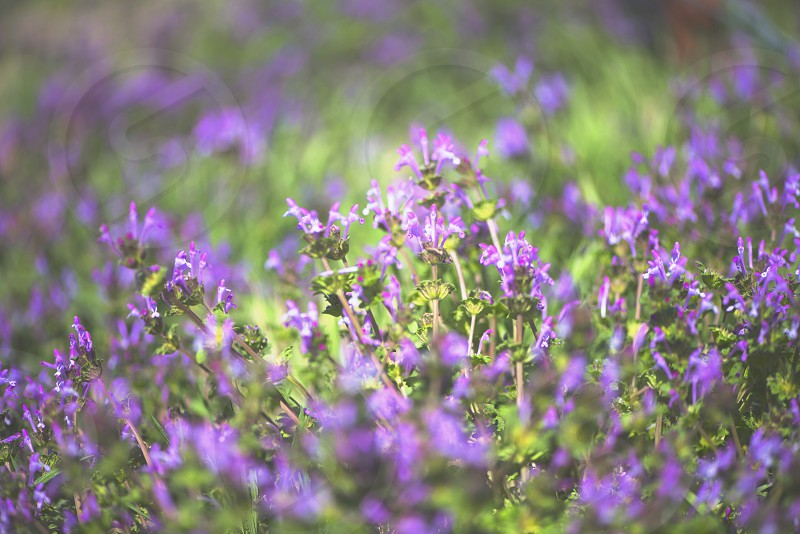 bokeh photography of purple flower during daytime photo