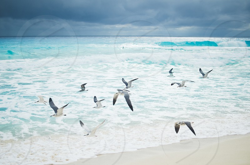Seagulls flying over the turquoise ocean with dark clouds in the sky.  photo