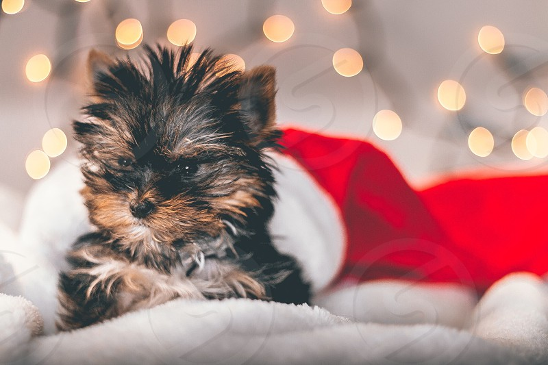 black and brown long coated medium breed puppy on white textile photo