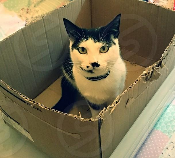 cat in box photo