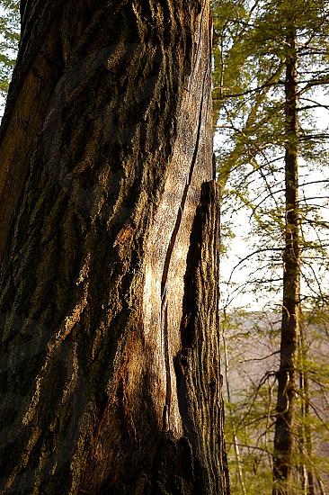 Tree. Curve. photo