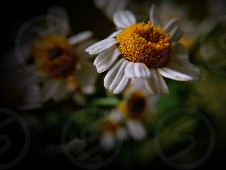 white petaled flowers with orange pollen in bloom during daytime photo