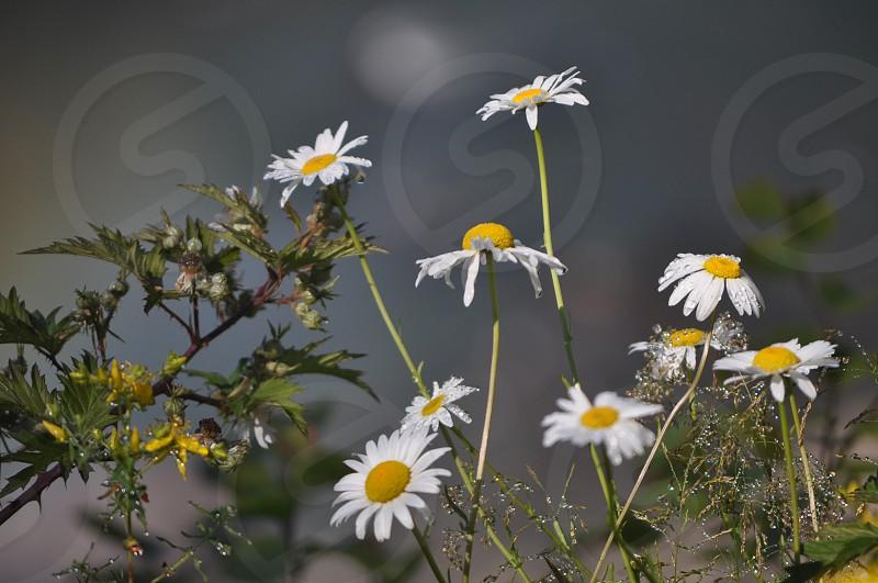 Morning mist on wildflowers.  photo