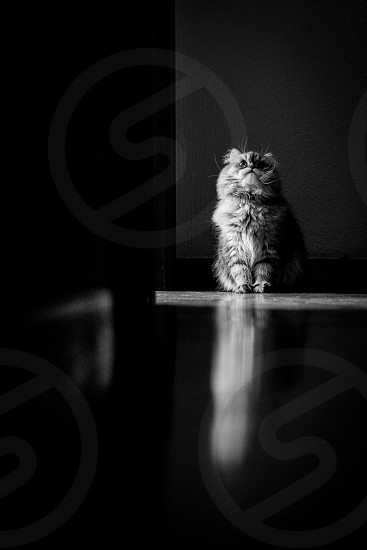 cat waiting expectation black and white natural light photo