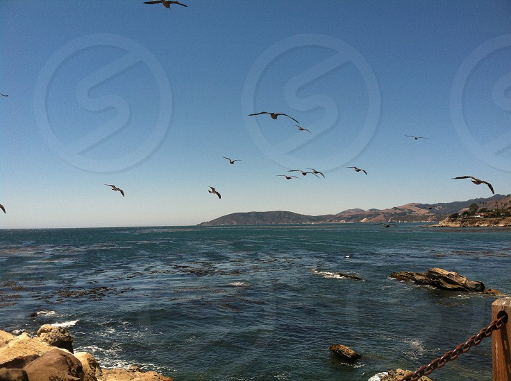 Seagulls flying over the ocean with rocks photo