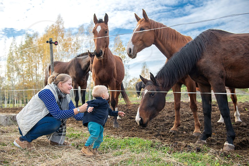 Mother introduces her baby to horses. photo