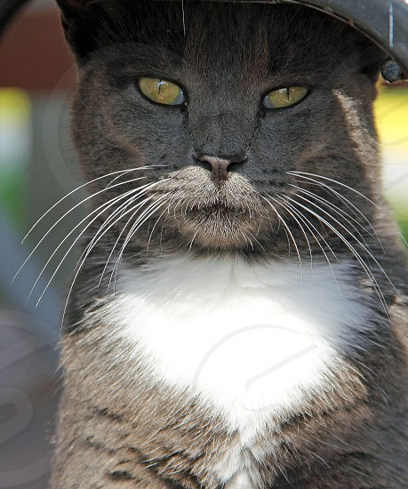 Kitty cat photo
