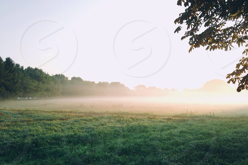 green open field engulf with fog during daytime photo