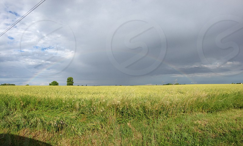 grain field under white clouds during daytime photo