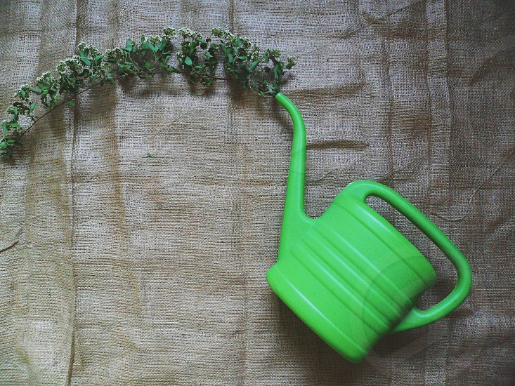 Dry branch of flowers and a green watering can for watering flowers photo