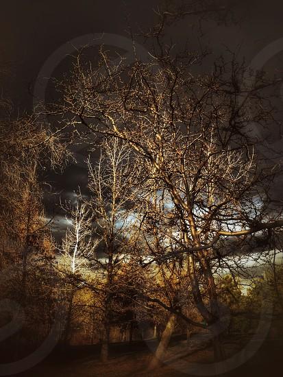 Dark woods photo