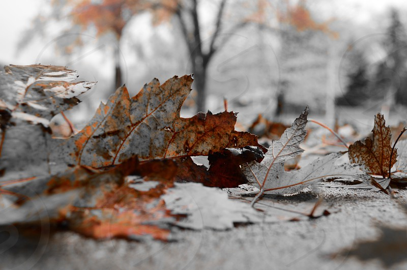 Leaf Fall Weather Chilly Brown Simple Nature photo