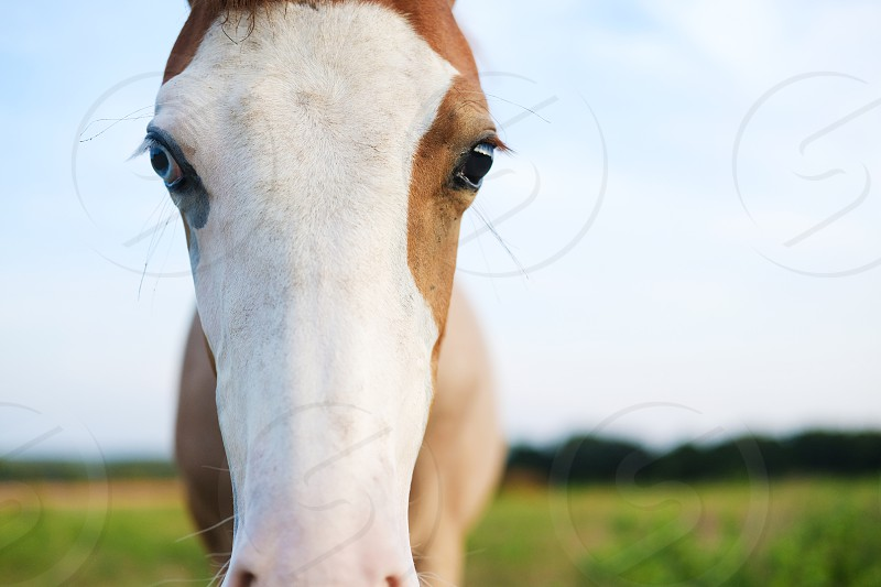 Colt foal horse close up for portrait. photo