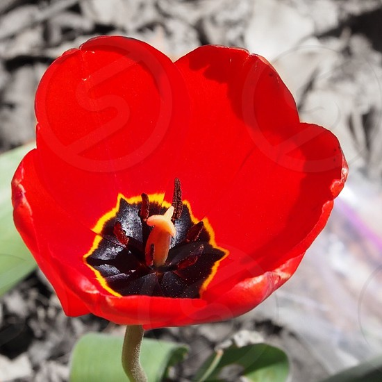 Red Brown and Yellow Flower photo
