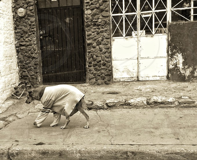 Perro callejero dog street dog with clothes photo