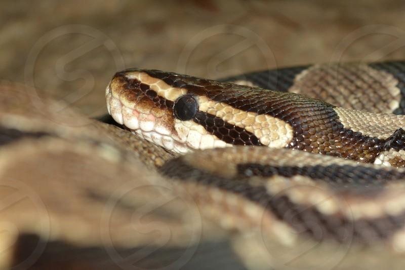 Cascade Snake photo