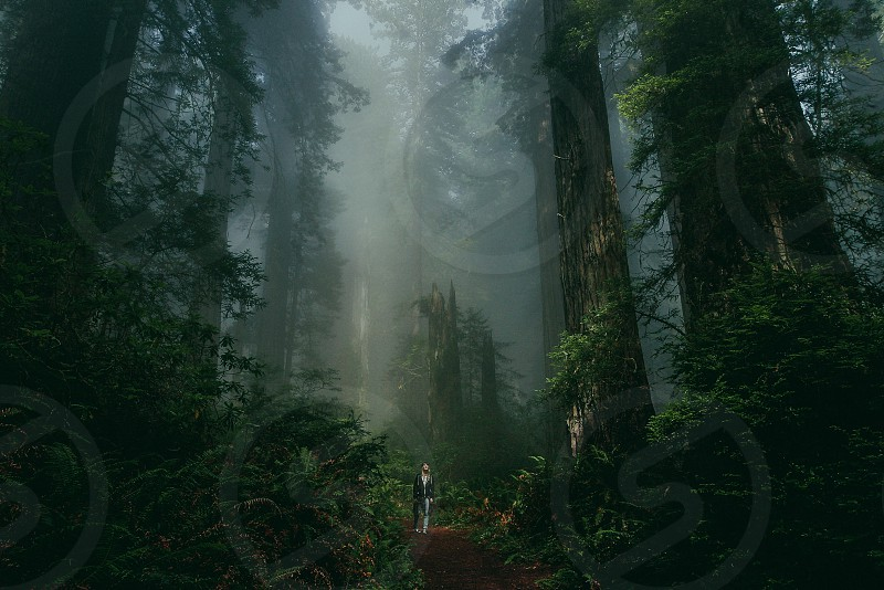 Red woods adventure California photo