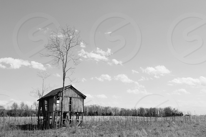 brown wooden abandoned house in the middle of grass lands photo