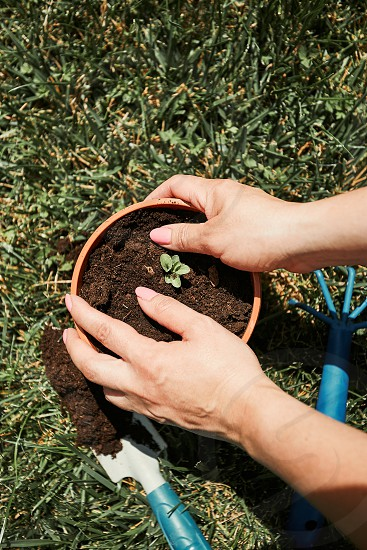 Gardener replanting plant into a new pot. Top view of female hands planting a plant. Using tools rake and shovel. Real people authentic situations photo