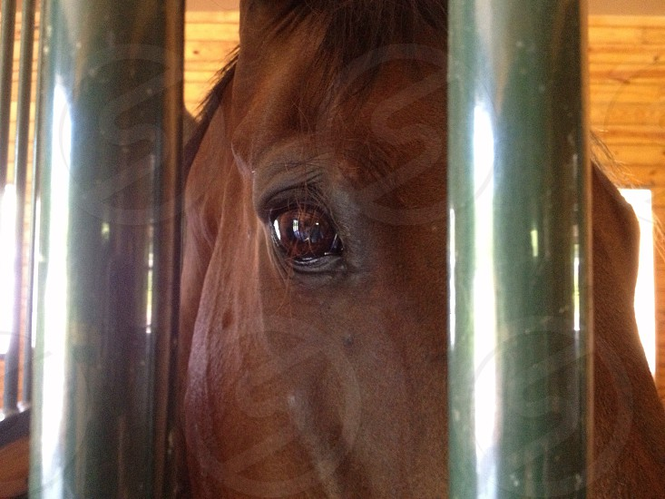 Horse in a stall  photo
