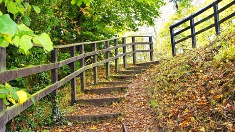 gray steps and wood fence near green trees photo