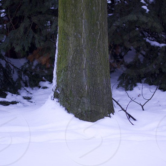 snow winter cold dark tree branches landscape nature leaves nieve invierno Germany Europe Europa Alemania Dusseldorf photo