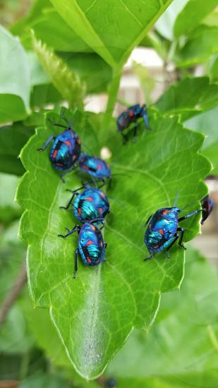 jewel bugs photo