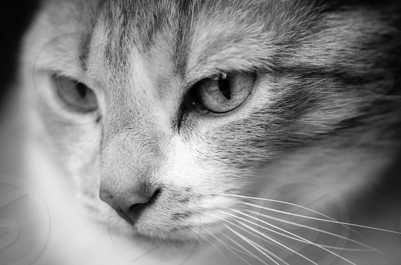 cat close-up macro face eyes fur black and white feline female portrait animal photo