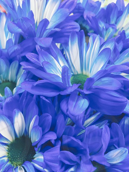 Blue flowers  photo
