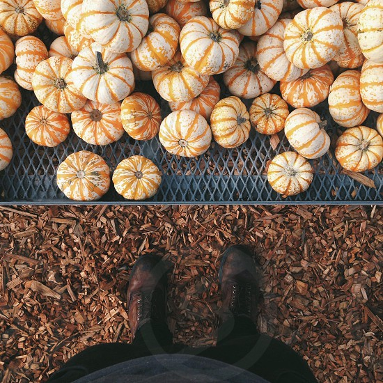 pile of small pumpkins photo