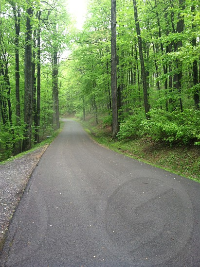 Long road along wooded area photo