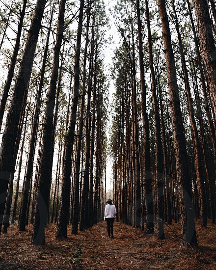 person on white long sleeve shirt walking in forest during daytime photo