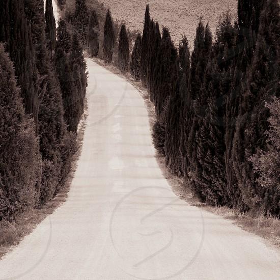 Cypress Tree Lined Road Tuscany photo